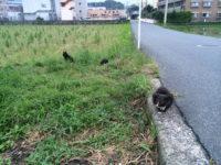 猫の家族|探偵事件簿-福岡