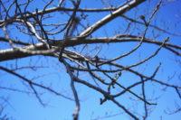 春先と人の失踪-桜の蕾|探偵事件簿-福岡