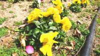 春が来た~!」とつい叫んだ後|探偵事件簿-福岡